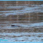 Deer Seal_11.jpg