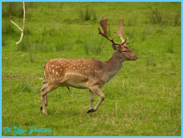 Deer Seal_62.jpg