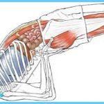 Anatomy of the yoga pose Setu Bandhasana. Enjoyed and repinned by ...