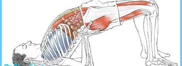 Anatomy of the yoga pose Setu Bandhasana. Enjoyed and repinned by ...