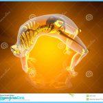 The Yoga inverted bow pose (Urdhva Dhanurasana). 3D Illustration.