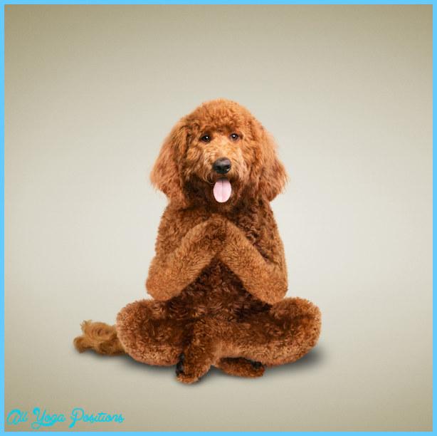 Yoga dog  _0.jpg