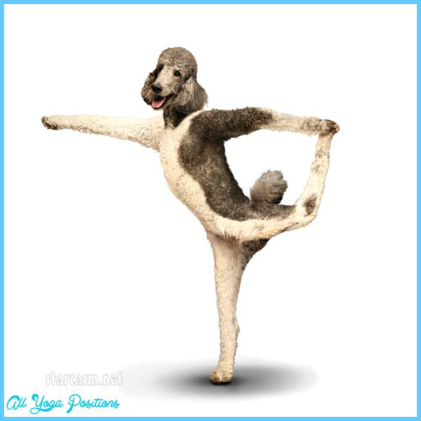 Yoga dog  _4.jpg