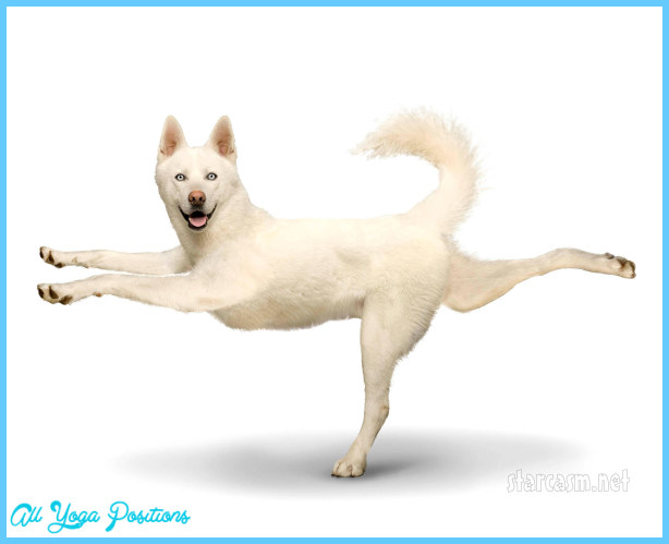 Yoga dog  _6.jpg