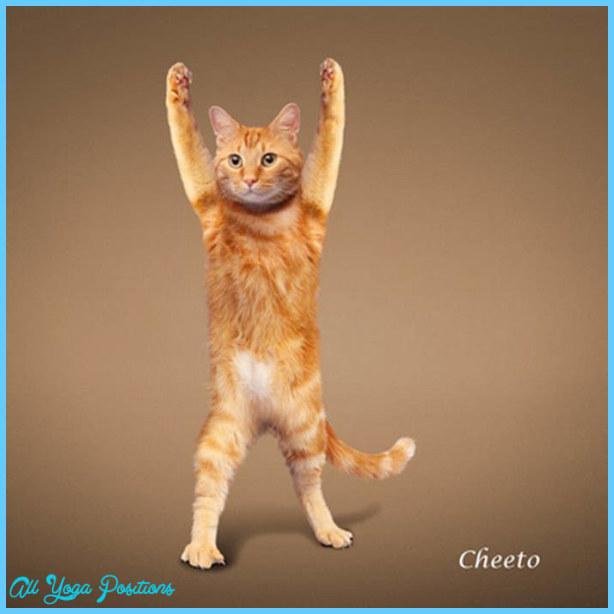 Yoga poses animals _26.jpg