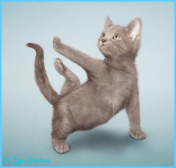 Yoga poses animals _3.jpg