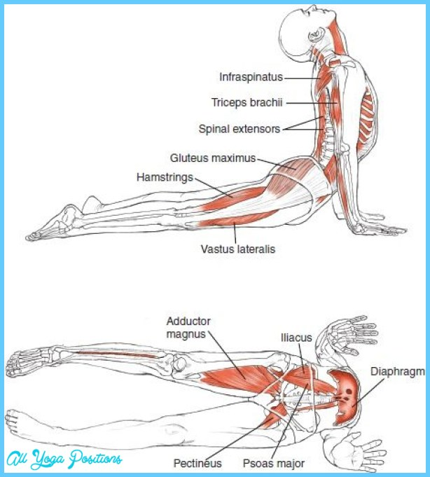 Anatomy of an Asana_8.jpg