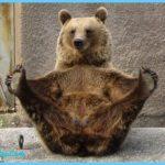 Animal Poses Yoga_2.jpg