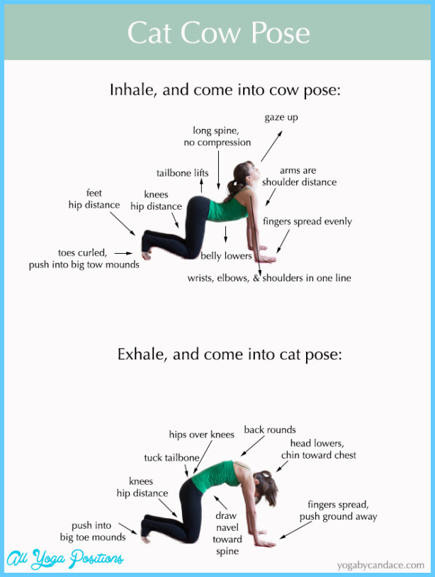 Cat And Cow Yoga Pose_2.jpg