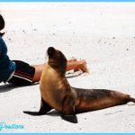 Seal Pose Yoga_6.jpg
