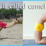 Bikram Yoga Camel Pose_18.jpg