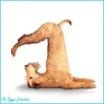 Funny Yoga Poses Pictures_13.jpg