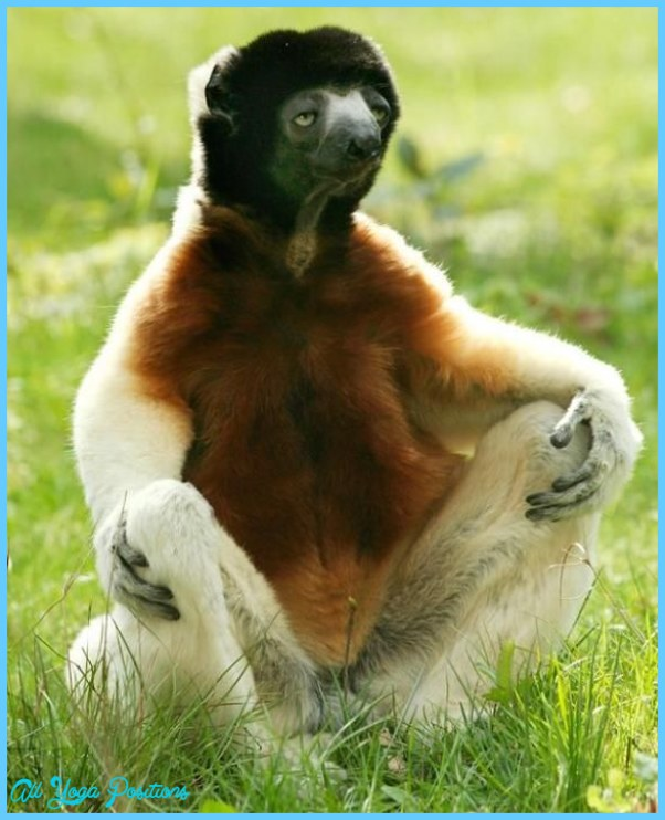 Funny Yoga Poses Pictures_19.jpg