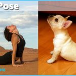 Funny Yoga Poses Pictures_3.jpg