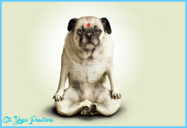 Funny Yoga Poses Pictures_9.jpg