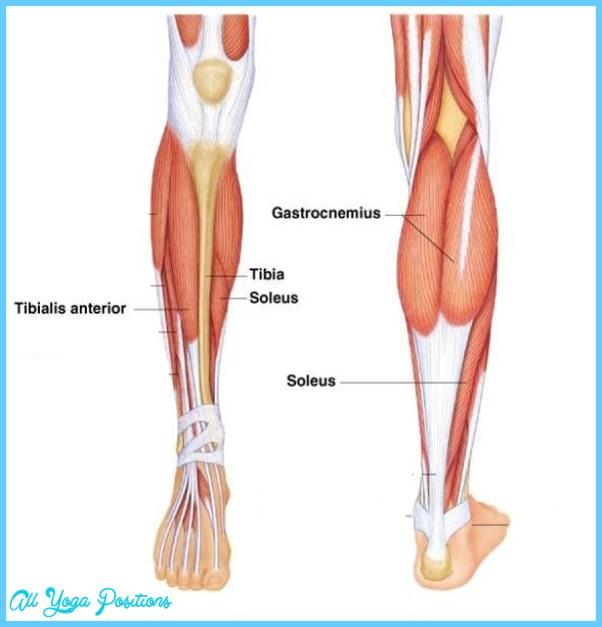 Anatomy-ankle-blog.jpg