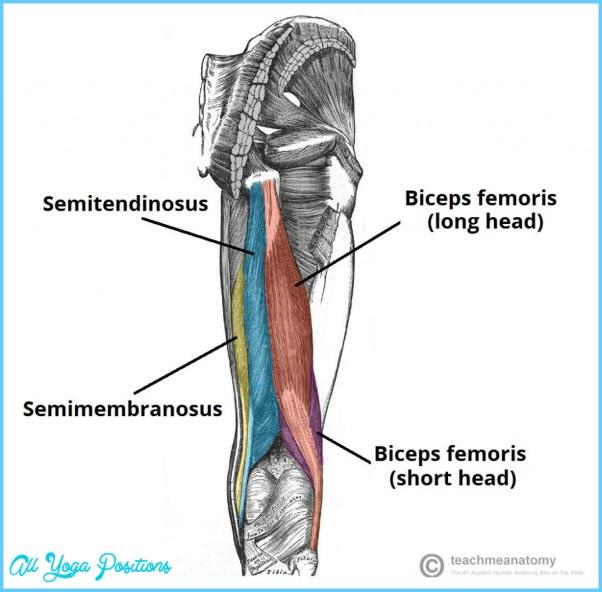 anatomy-of-hamstring-muscle.jpg