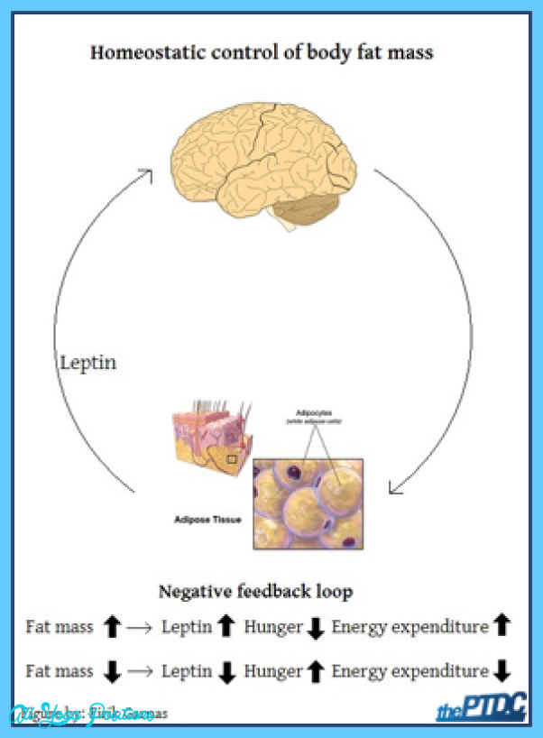 Better Control of Body Fat_7.jpg
