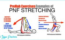 PreHab-Exercises-Effective-Stretching-Techniques-Examples-of-PNF-Stretching.jpg