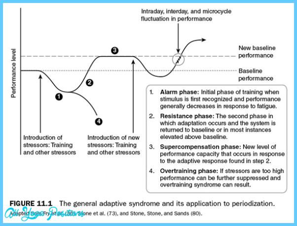 PRINCIPLES OF PHYSICAL TRAINING: ADAPTATION TO STRESS_7.jpg
