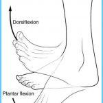 Terms-of-Movement-Dorsiflexion-and-Plantar-Flexion-CC.jpg