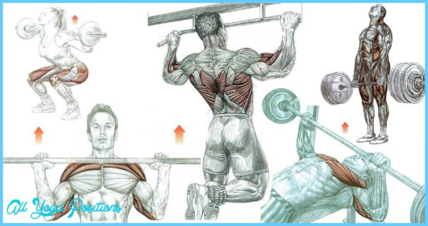 Top-Bodybuilding-Weight-Training-Exercises.jpg