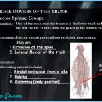 Trunk/Low-Back Lateral Flexion_0.jpg
