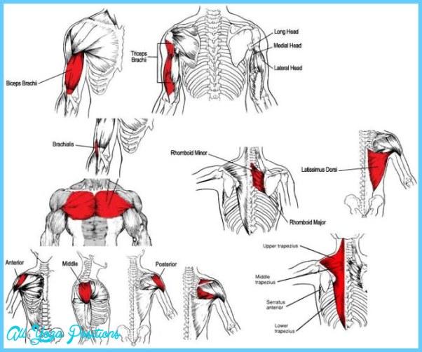 Upper-Body-Muscle-Anatomy.jpg