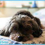 dog-heart-murmur-signs_canna-pet-e1504137519539.jpg
