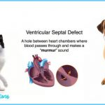 heart-murmur-in-dogs-and-cats-2-1024x532.jpg