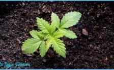 marijuana-maria-grass-yerba-1172314.jpg
