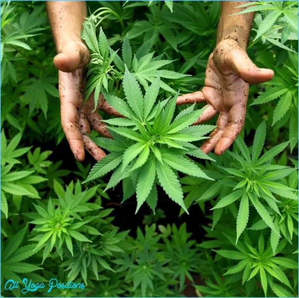 medical-marijuana-patients-lost-in-regulation-weeds-1434807882.jpg?crop=0.6686159844054581xw:1xh;0.18323586744639375xw,0xh