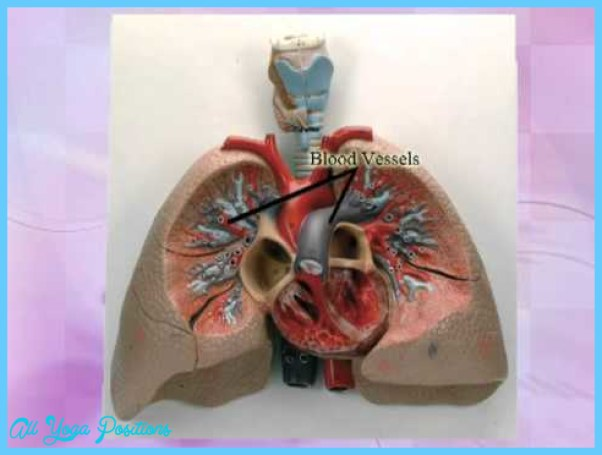 THE HEART-LUNG CONNECTION_15.jpg