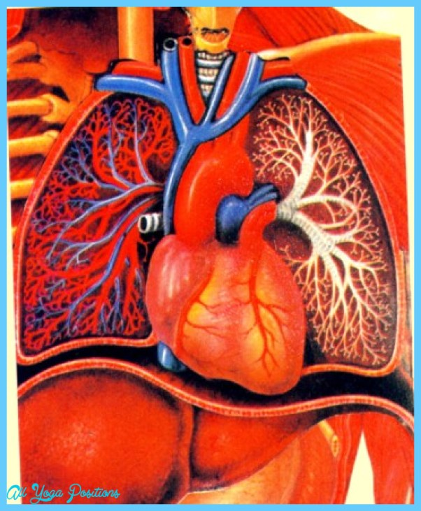 THE HEART-LUNG CONNECTION_16.jpg