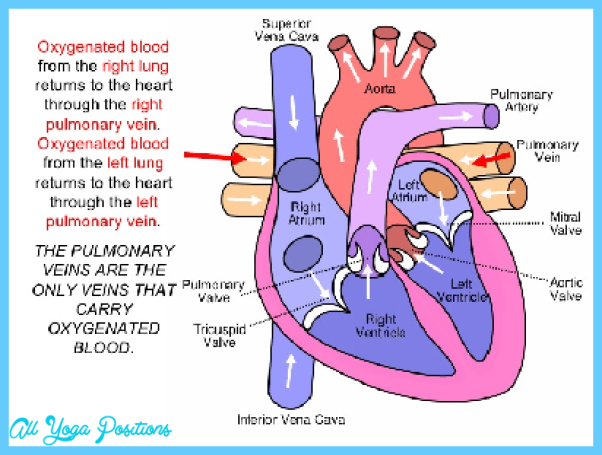 THE HEART-LUNG CONNECTION_3.jpg