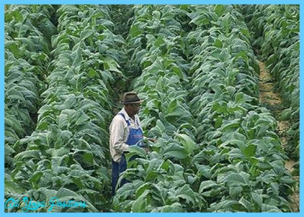 Tobacco-Control-Cell.jpg
