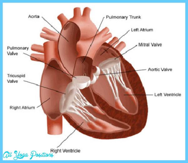 What's a heart murmur, and is it dangerous?_2.jpg