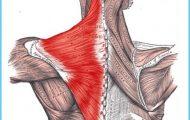 For Toning Abdominal Muscles Try Sulabha Hans Asana_15.jpg