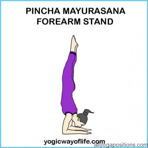 How to Do the Forearm Balance Ashtanga Pinchamayur Asana_13.jpg