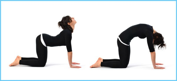 Yoga Exercise Dwipad Marjar Asana_13.jpg