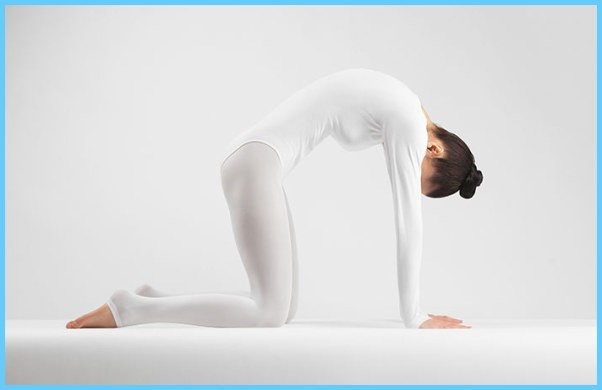 Yoga Exercise Dwipad Marjar Asana_15.jpg