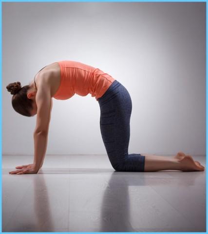 Yoga Exercise Dwipad Marjar Asana_17.jpg