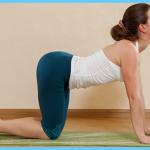 Yoga Exercise Dwipad Marjar Asana_6.jpg
