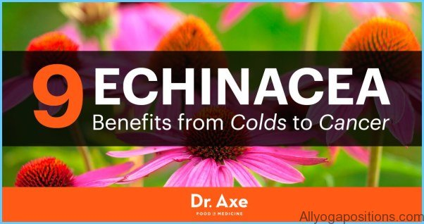 Echinacea Uses, Side Effects, Interactions, Dosage, and Warning_10.jpg