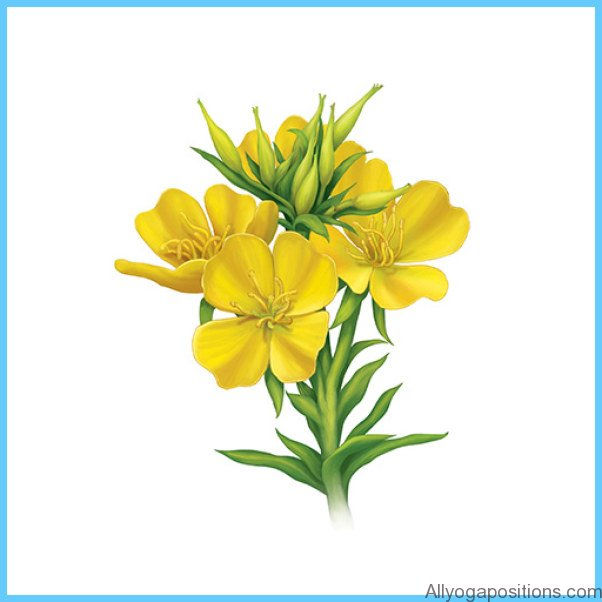 Essential Fats and Evening Primrose Oil for Premenstrual Syndrome_9.jpg