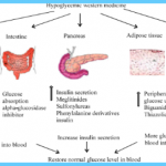 Hypoglycemia Conventional Treatment_0.jpg
