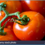 Lycopene for Heart Disease_10.jpg