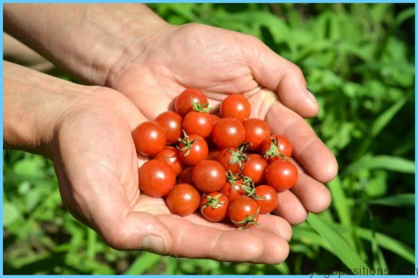 Lycopene for Heart Disease_11.jpg