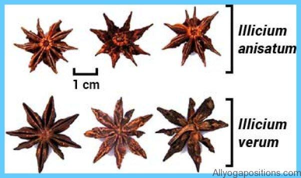 Star Anise_11.jpg