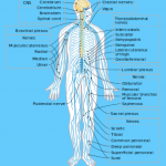 The Secrets of Marmas Vital Points of Human Body_1.jpg